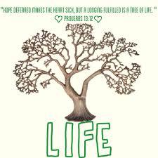 Tree of Life Arizona